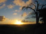 Sunset on the Kauri coast